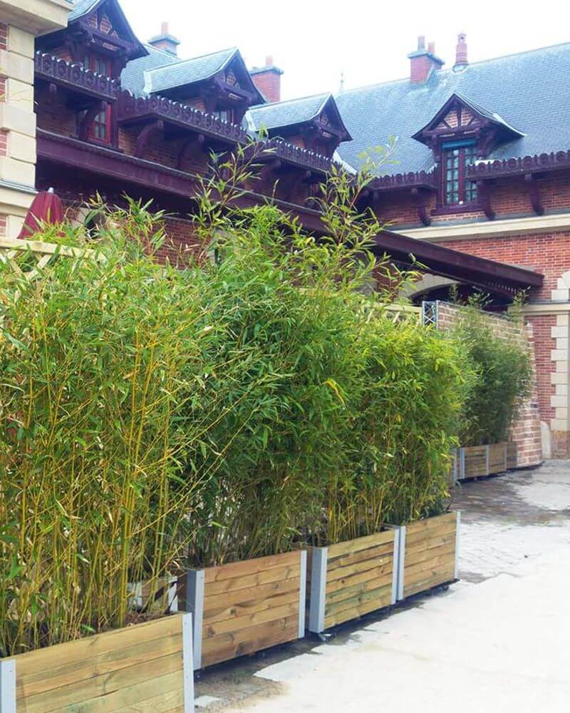 Contour De Balcon En Bambou bambou - green event